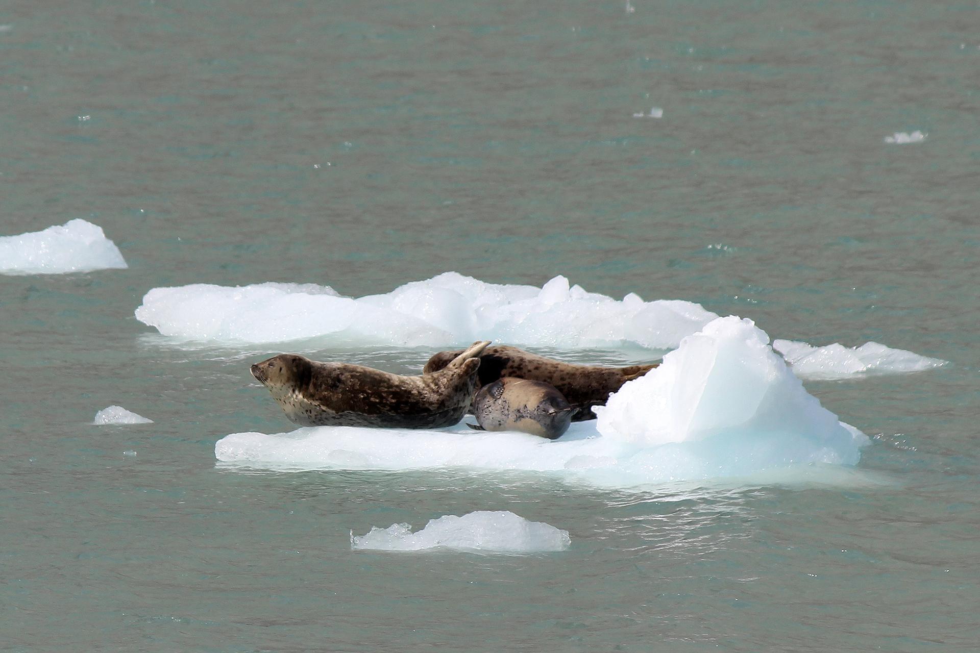 Alaska-333