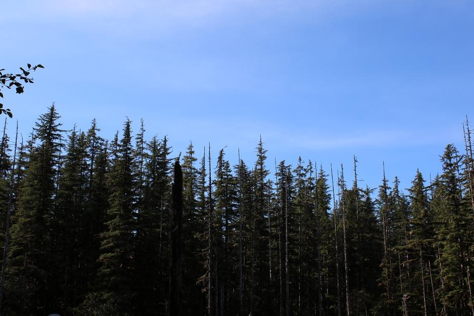 alaska-1393