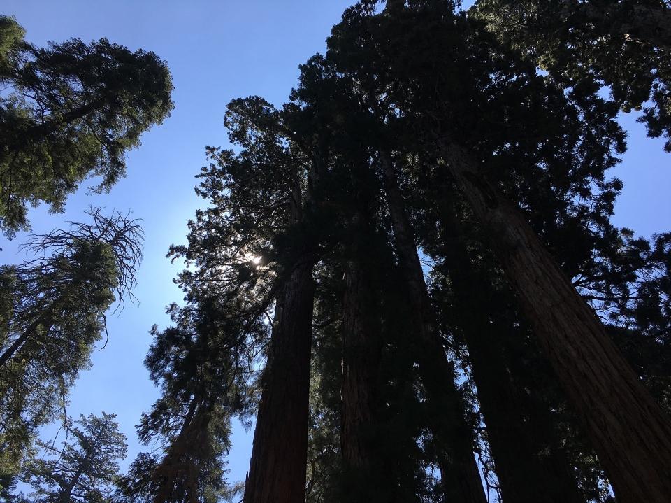 California2018-191