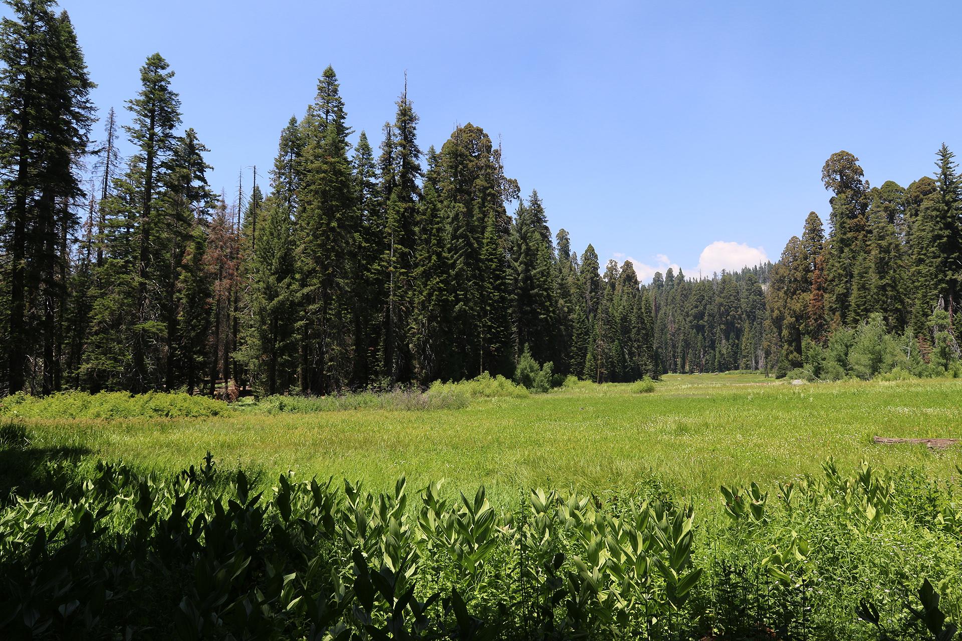 California2018-309