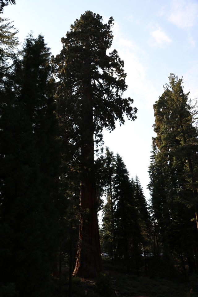 California2018-441